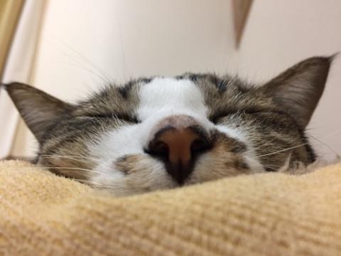 猫ベッドで幸せそうに眠る猫-ゆきお
