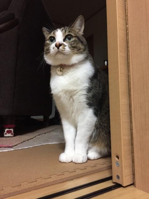 引き戸の手前で部屋に入らずに何かを待つ猫-ゆきお