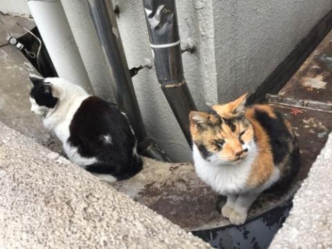 桜田公園の野良猫2匹(白黒の猫と白茶黒の猫)