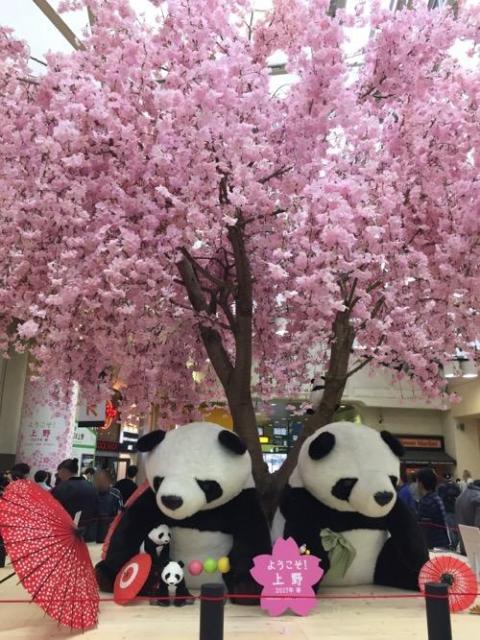 上野駅の桜とパンダ #ようこそ上野 2017年春