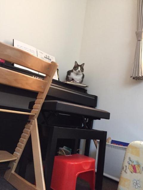 カワイの電子ピアノの上から小学六年生の娘を待つ猫-ゆきお