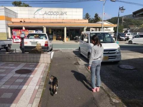 砥部町の野良猫2匹と小学6年生の娘(平成29年秋の砥部焼まつりの帰りに野良猫観察)