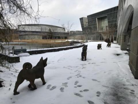 宮城大学の雪原を歩く犬、走る子供を見て元気だと感心する