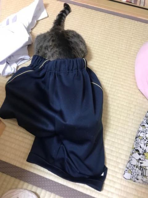 中学1年生の娘の学校のジャージに潜り込んで手を出して妻と遊ぶ猫-ゆきお