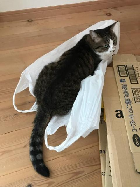 レジ袋の上で涼を取る猫-ゆきお