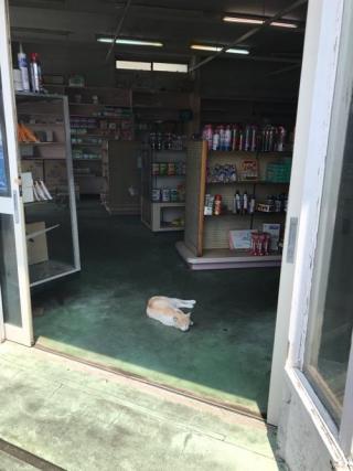 伊豆大島の商店入口で気持ち良さそうに眠る猫