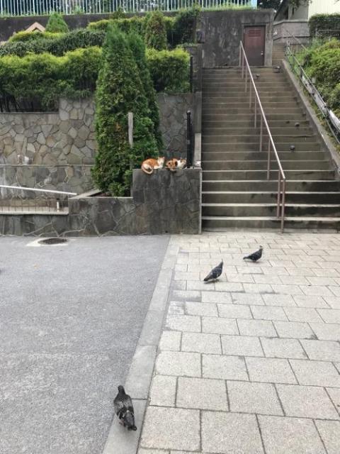 後楽園駅前の公園で仲良く並ぶ猫2匹