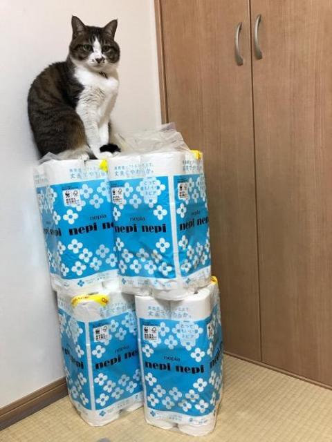 ネピアのトイレットペーパーの山の上で座る猫-ゆきお