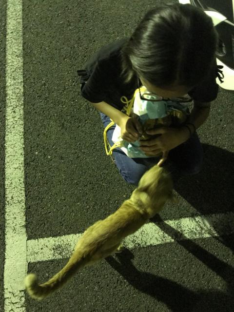 夜の駐車場をうろつく人懐っこい野良猫と娘 - 媛彦温泉にて