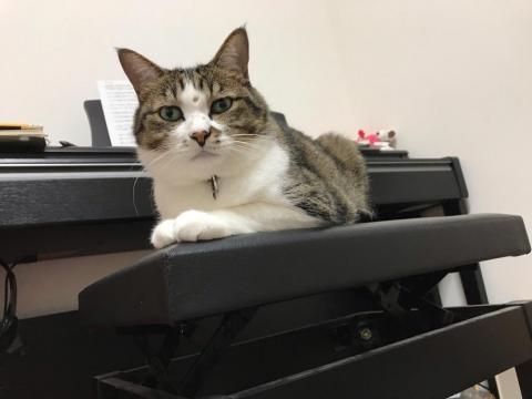 ピアノ用の椅子に座るふてぶてしくもかわいい猫-ゆきお