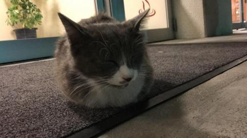 自動ドア前の人懐っこい猫に癒される - 天然温泉シーパMAKOTOにて