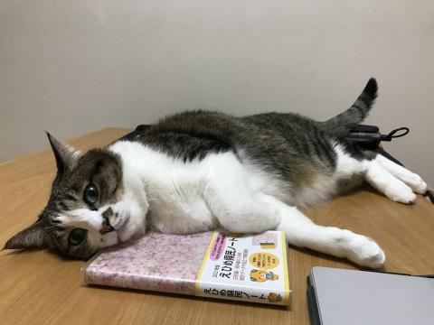 2021年版えひめ県民ノートを枕にして寝転ぶ猫-ゆきお+2021年の目標