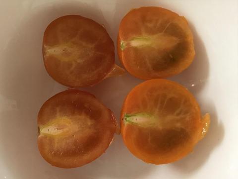 ミニトマト ネネとオレンジ千果を食べた感想