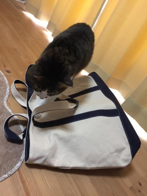 2017年のコムサイズムのメンズMサイズの福袋の上を歩く猫-ゆきお