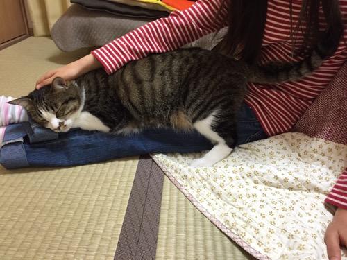 10歳の娘の足にまたがって眠る猫-ゆきお