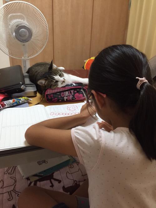 コタツで勉強をする小学五年生の娘を眠そうな目で監視する猫-ゆきお