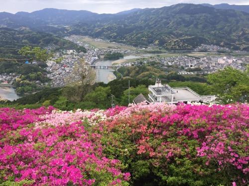 冨士山公園のつつじの花と大洲市街と肱川
