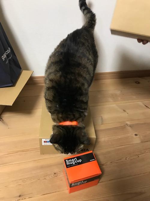 床に置かれたRegettaCanoeの2019年の福袋の中身の上に飛び乗った猫-ゆきお