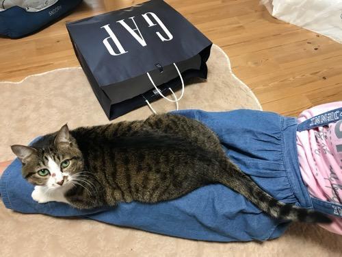 中学一年生の娘の両足、膝上に座る猫-ゆきお