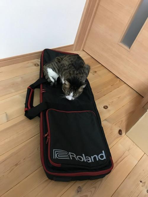 Roland GO:KEYS キーボード運搬用の専用ケース(CB-GO61)に座る猫-ゆきお