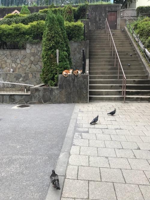 後楽園駅前の公園の猫、鳩
