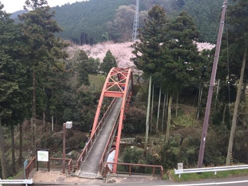 本谷温泉本館前から眺めた本谷公園の桜と本谷出湯橋