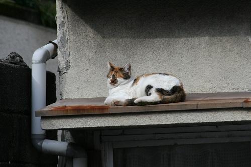正覚寺のすぐ近くの民家の屋根の上にいた猫