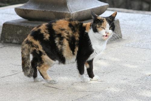 正覚寺の門の下にいた猫