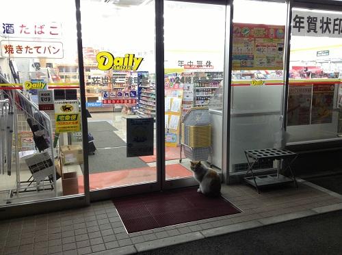 Daily YAMAZAKI デイリーヤマザキ 佐世保三浦町店(長崎県佐世保市三浦町46-1)玄関前の猫