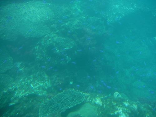 海中展望船「愛媛観光船ユメカイナ(愛南町西海観光船)」の海中展望室内の窓から眺めた海中を泳ぐ魚の群れ