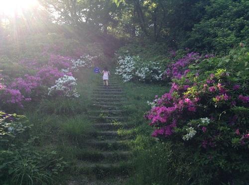 えひめ森林公園 谷上山第2展望台へのツツジで囲まれた山道を登る娘