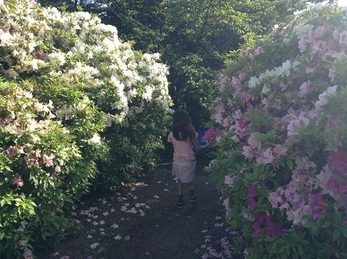 えひめ森林公園 谷上山第2展望台の美しい赤と白のツツジの花に囲まれた道を歩く娘