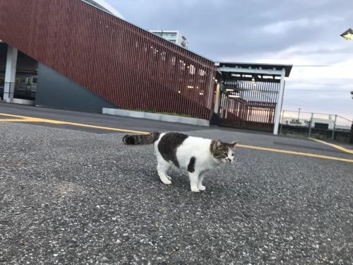 JR袖ケ浦駅前で立ち止まる猫