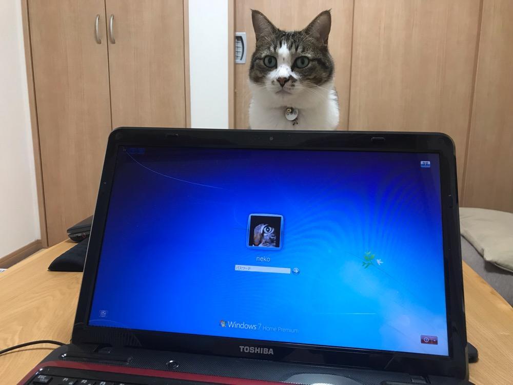 TOSHIBA dynabook T451/58ERモデナレッドの液晶モニタの向こうから見つめてくる猫-ゆきお
