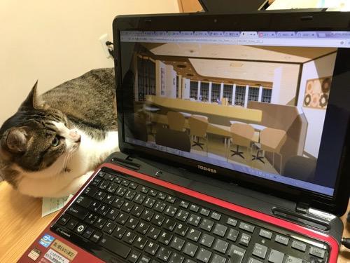 PC画面で再生されるアニメ「恋物語」のワンシーン(ミスタードーナツ店内で密会する戦場ヶ原ひたぎと貝木泥舟)を見つめる猫-ゆきお