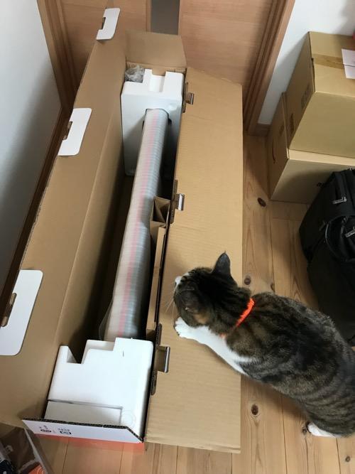 Roland GO:KEYSの箱の中を覗く猫-ゆきお