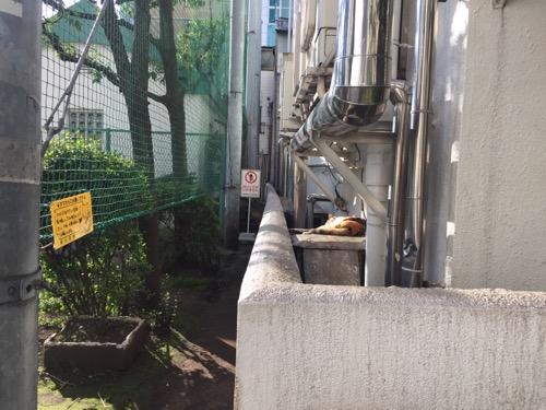 日当たりの良い壁際で眠る茶色い桜田公園の猫
