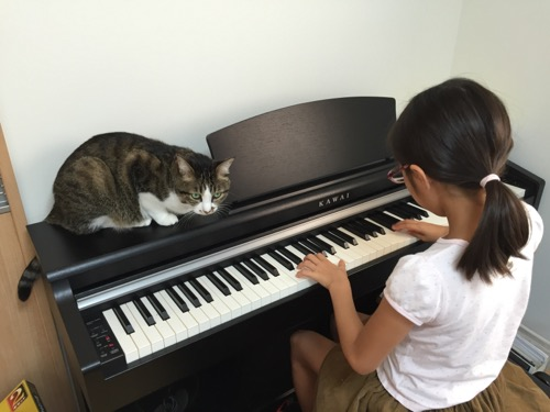 小学五年生の娘が練習するKAWAIの電子ピアノの上に座り、練習を見守る猫-ゆきお