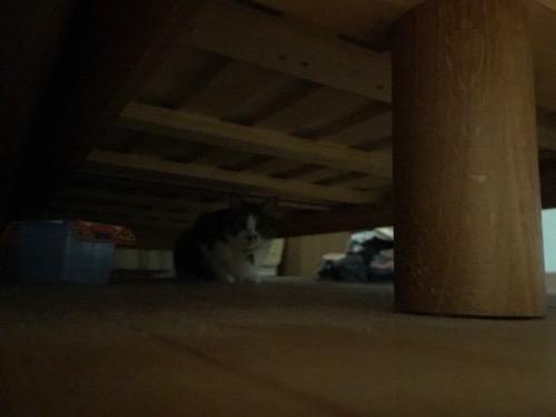 暗い部屋でベッドの下に潜り込んで飼い主を見てくる猫-ゆきお