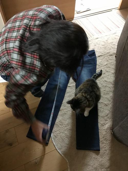 ズボンの股下をメジャーで測る妻の手つきをズボンの上から眺める猫-ゆきお