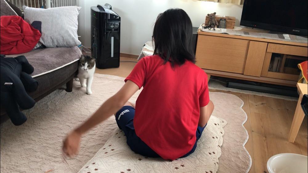 中学2年生の娘が振り回す紐に注目する猫-ゆきお