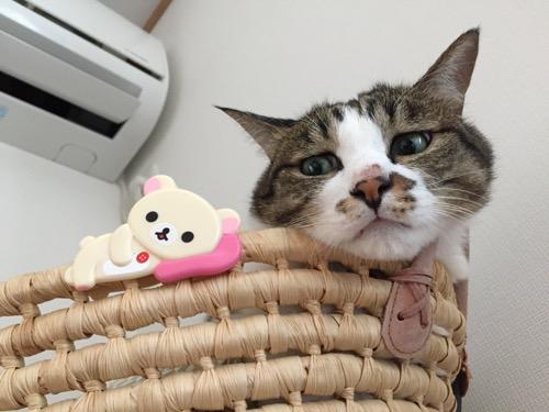 コリラックマの寝そべるバッジの着いた籠から顔を出す猫-ゆきお
