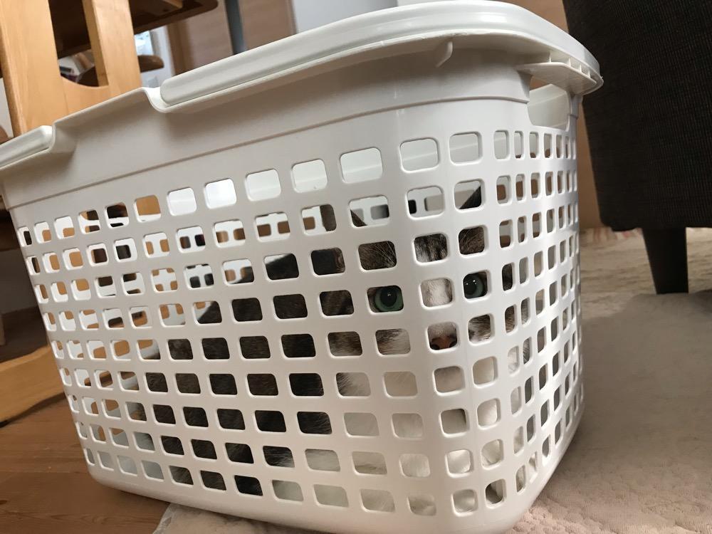 洗濯籠に入って網目から外を眺める猫-ゆきお