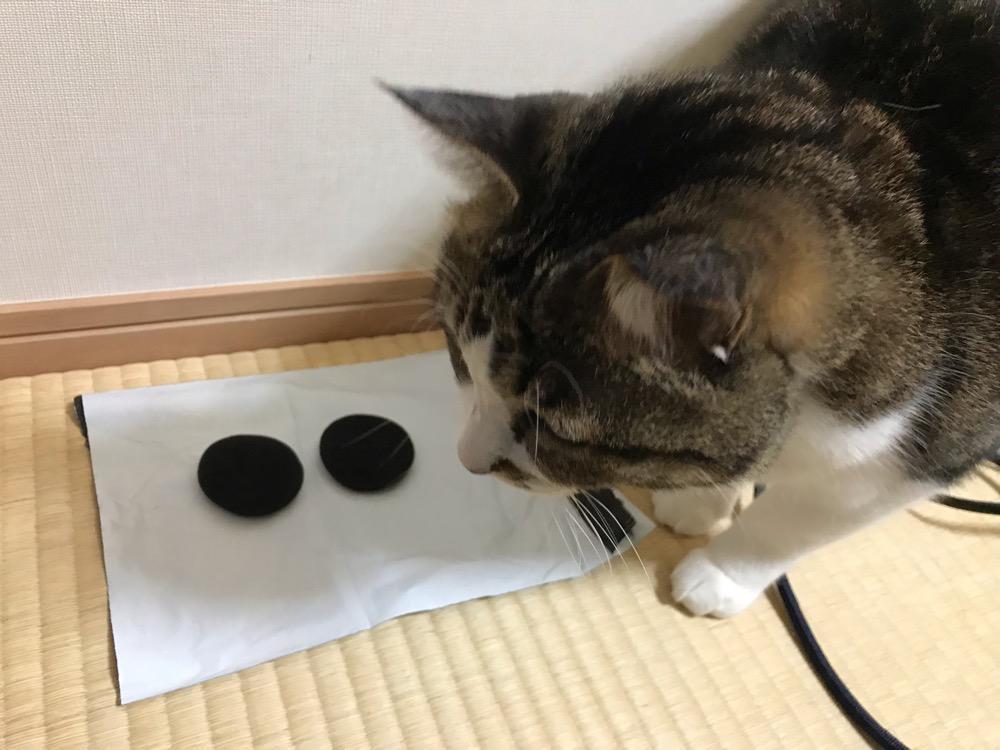 直径50mmのヘッドホン交換用イヤーパッドの見物に来た猫-ゆきお