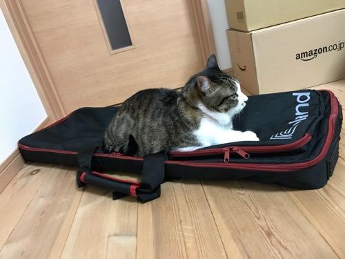 Roland GO:KEYS キーボード運搬用の専用ケース(CB-GO61)に座る猫-ゆきおを横から見た時の様子