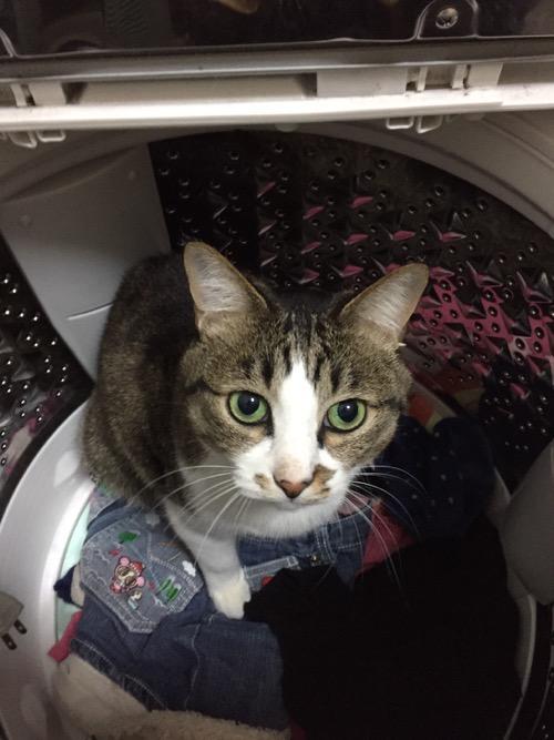 洗濯機の中から見つめてくる猫-ゆきお