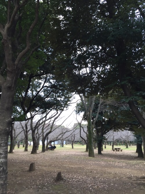代々木公園の内の森林、落ち葉、切り株、ベンチに座る人々