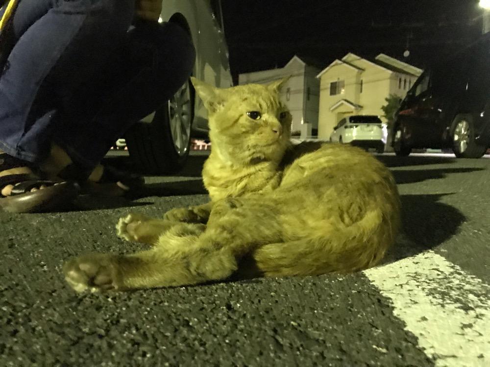 夜の駐車場に座って明後日の方向を見る野良猫 - 媛彦温泉にて