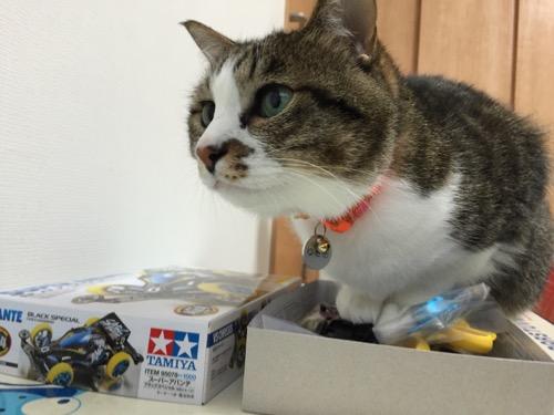 ミニ四駆「スーパーアバンテ ブラックスペシャル」の箱の中に無理やり座る猫-ゆきお