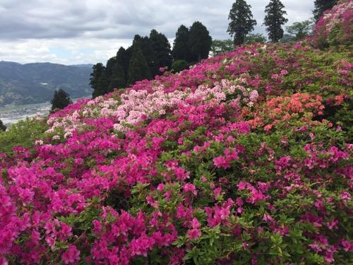 赤、ピンク、オレンジ色のつつじの花に覆われた冨士山の山頂付近